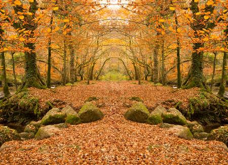 russet: Autumn woodland