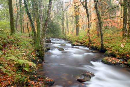 english west country: River webburn near Buckland Dartmoor Devon Uk