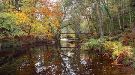 river teign in autumn devon uk