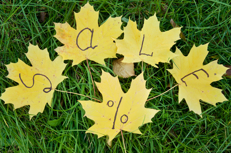 yellow leaves lie on green grass. autumn. sale inscription