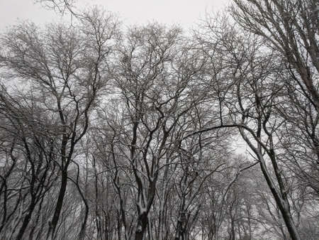 Winter in the park landscape Nature background