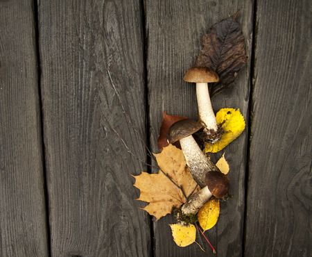 forest autumn mushrooms and leaves on a dark wooden rustic background 免版税图像