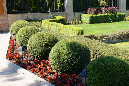 round topiary, green border in the park.
