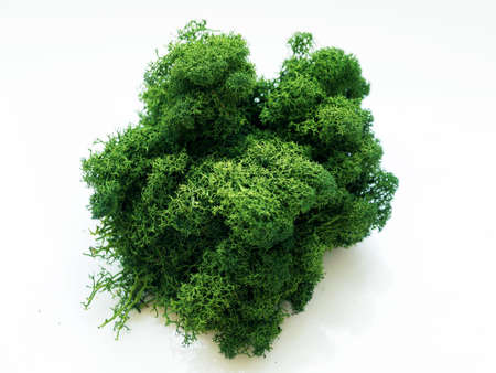 green stabilized forest moss for decoration on white background close-up