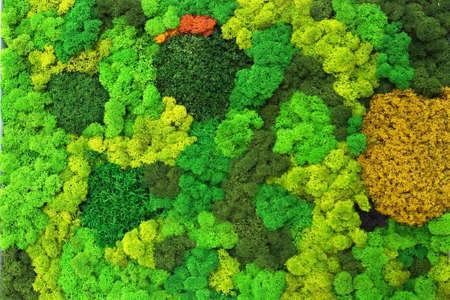 multicolored decorative stabilized moss as wall decor in interior design.
