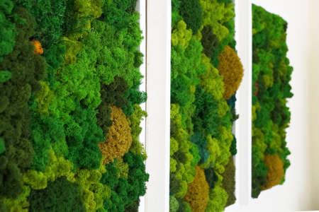 multicolored decorative stabilized moss as wall decor in interior design, side perspective Standard-Bild