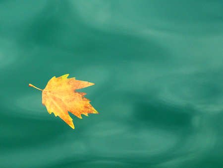 yellow autumn leaf floating in turquoise water, autumn background, copy space Standard-Bild