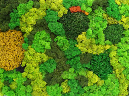 multicolored decorative preserved preserved moss as wall decor. eco-design concept. live vertical gardening
