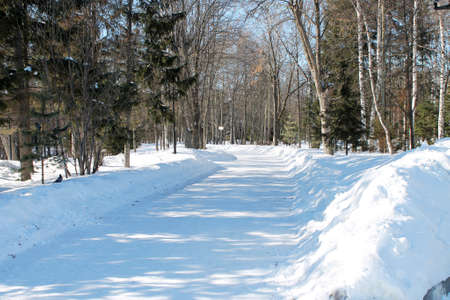 snow-covered alley in a winter park in sunlight.