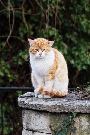 portrait of a homeless ginger cat in the park. Standard-Bild