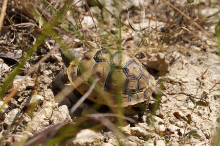 land turtle in the wildlife close-up in sunlight