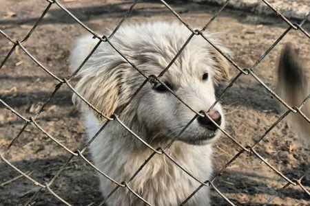 stray dogs  photo