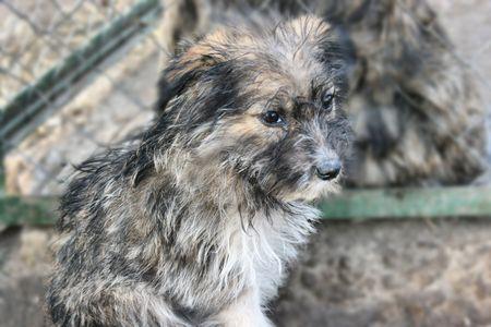 Homeless and stray dog photo
