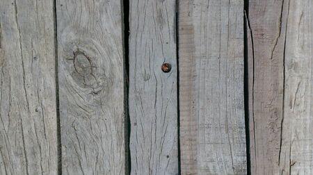 closeup: Wooden gray texture close-up