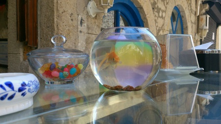 gold: Gold fish in small aquarium on a glass table
