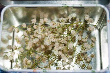 metal box: Gypsophila in metal box close-up