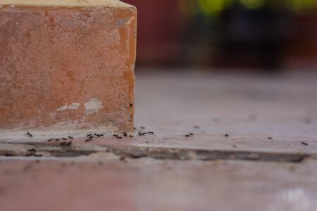Ants on the tile. Close-up, shallow depth of field