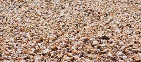 Seashells summer banner, a collection of varios natural seashells for background, close up. Beautiful shells on the beach on the Ionian Sea, Puglia, Italy