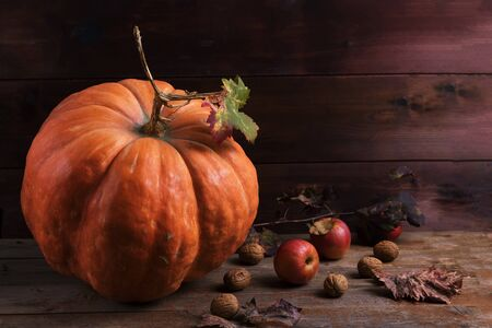 Orange pumpkin with cardoncelli mashrooms, apples, walnuts and colorful leaves on old rustic wooden boards. Autumn Thanksgiving day background. Beauty harvest autumn concept. Fall composition
