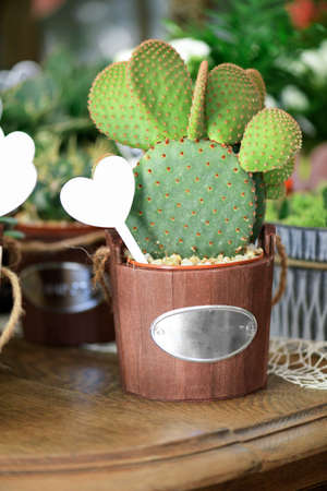 Bunny ears cactus in vase on a blur background of florwers shop Imagens