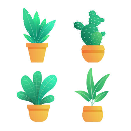 Collection of house plants in a pot