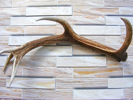 elk point: antlers on wooden background