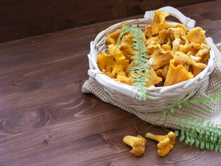 Organik wild chanterelle mushroom on wooden table