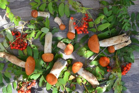 Mushroom fungus orange-cap boletus fresh with leaves of forest rustic and rowan on a wooden background Stockfoto - 132953544