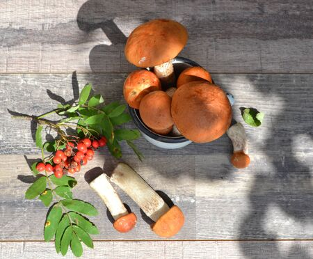 Autumn styled botanical arrangement. Composition of red cup boletus mushrooms, rowan berries on shabby table flat lay in sunny day Stockfoto