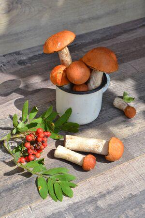 Fresh orange-cap boletus and berries. Autumn concept, russian cuisine