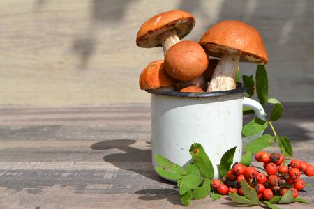 Autumn background with red boletus  mushrooms and rowan berries, autumn concept. Rustic metal white cup