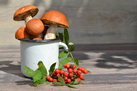 Autumn still life of orange cup mushrooms and red rowan berries. Copy space Stockfoto - 132954169