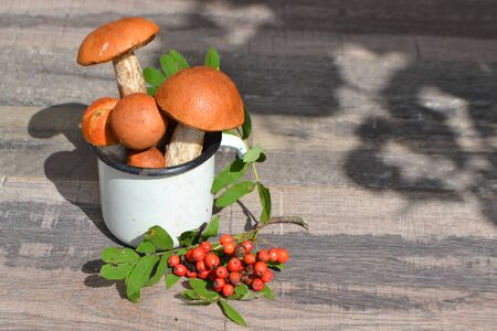 Freshly picked appetizing mushrooms red-boletus in cup with red rowan, wooden background and copy space