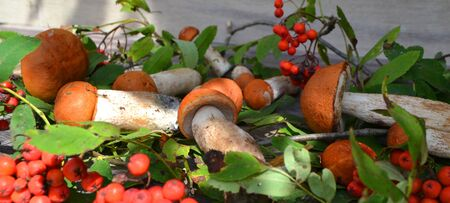 Mushrooms and rowan berries on a wooden background. Food, healthy. Panoramic photo