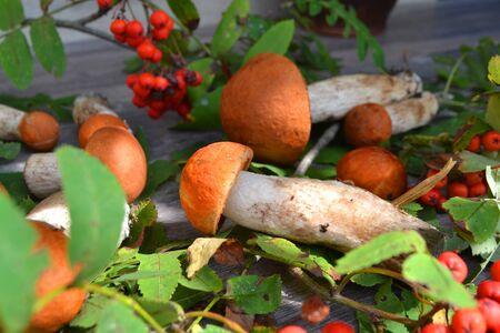 Boletus mushrooms in russian style. Organic food ingredients Stockfoto - 132953751
