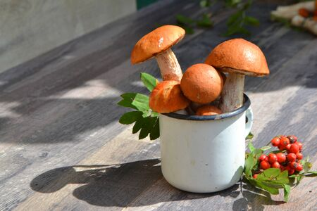 Bright, clean, beautiful edible mushrooms lie on a wooden background. Forest red boletus in rustic metal cup with rowan on shabby table, russian organic cuisine