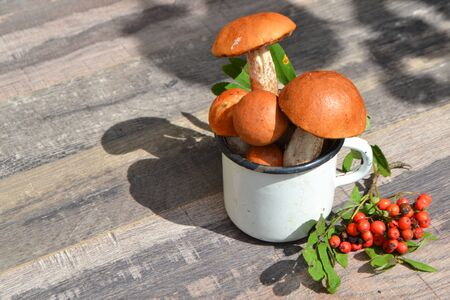 Vegetarian eco-friendly food. Gifts of the russian forest, orange and red cup boletus
