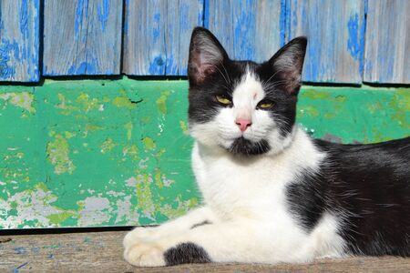 Cat in black and white color with shabby effect in the old house of russian village, shabby natural background
