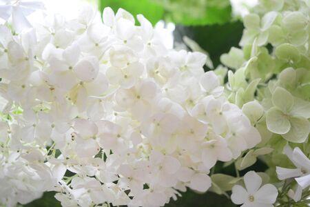A bouquet of green garden flowers hydrangea and phlox, close up