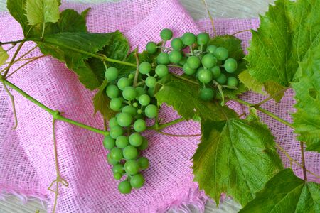 Green grape picking field, grape on pink napkin top view, agriculture and harvesting Stockfoto