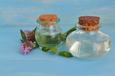 Bottle of elixir or essential oil and fresh clover flowers on blue wooden background
