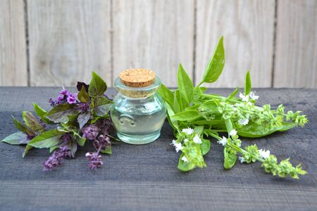 Essential oil with basil leafs and flowers. Violet and green basil, shabby wooden table in garden, sunny day. Extract, fresh.