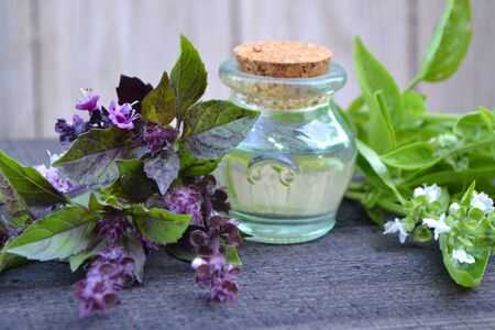 A bottle of basil essential oil with fresh basil leaves and flowers, basil of green and violet (purple) color. Massage, healthy. Stok Fotoğraf