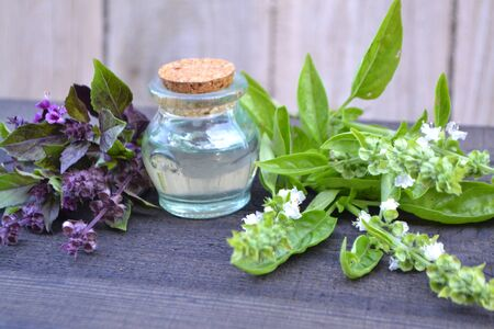 A bottle of basil essential oil with fresh blooming purple and green basil. Stok Fotoğraf