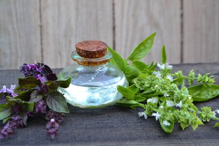 Natural essential oil of purple and green basil in bottles on rustic table. Essential fragrance aromatherapy. Fresh basil herb.