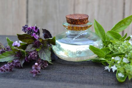 Little bottle of essential oil and purple and green fresh blooming basil Stok Fotoğraf