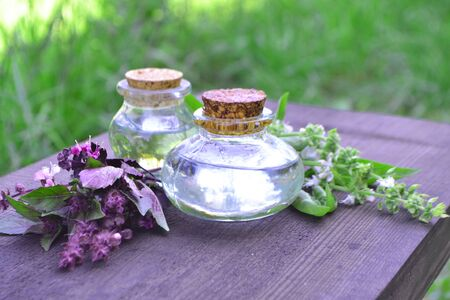 Alternative health care and herbal medicine. Fresh purple and green basil herbs and aromatic oil on wooden table in the garden in sunny day Stok Fotoğraf