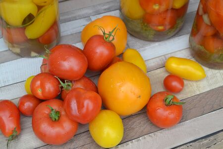 Variety tomatoes on rustic table. Colorful tomato - red, yellow and orange