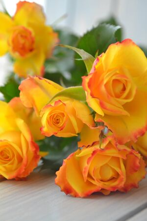 Yellow and orange bright roses bouquet on teal background vertical image Stockfoto