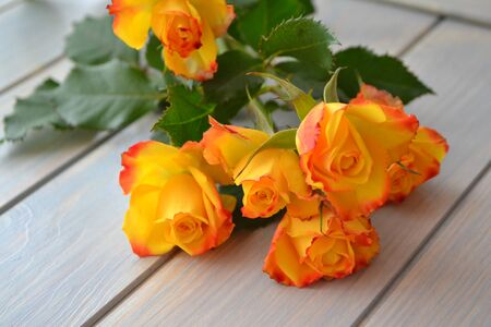 Yellow roses flowers over blue teal wooden table. Stockfoto